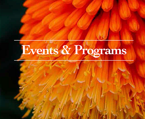 Events & Programs